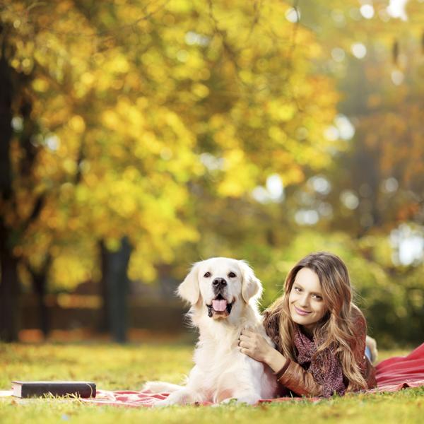 Pet travel tips for travel nurses