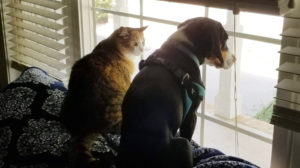 Travel nursing with pets - Dog and cat looking out the window