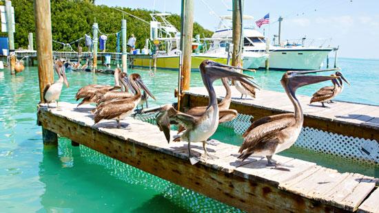 Pelicans standing on dock in green ocean