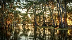 Landscape of bayou